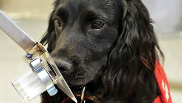 nariz electronica perro