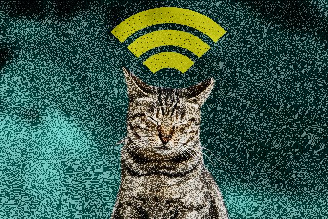 http://www.audienciaelectronica.net/wp-content/uploads/2014/08/gato-wifi.jpg